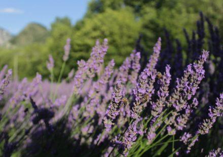 Festival van aromatische planten !