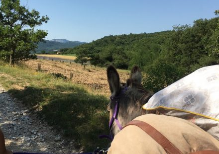 Jojo l'âne vous mène en balade